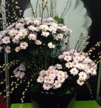 Décoration florale pour un magasin, un hôtel ou un restaurant